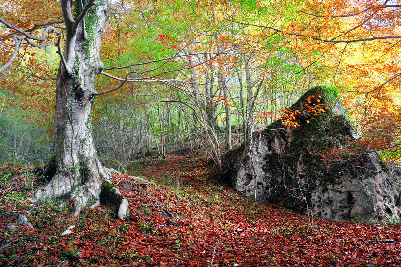 Forest in autumn with a rock stock image