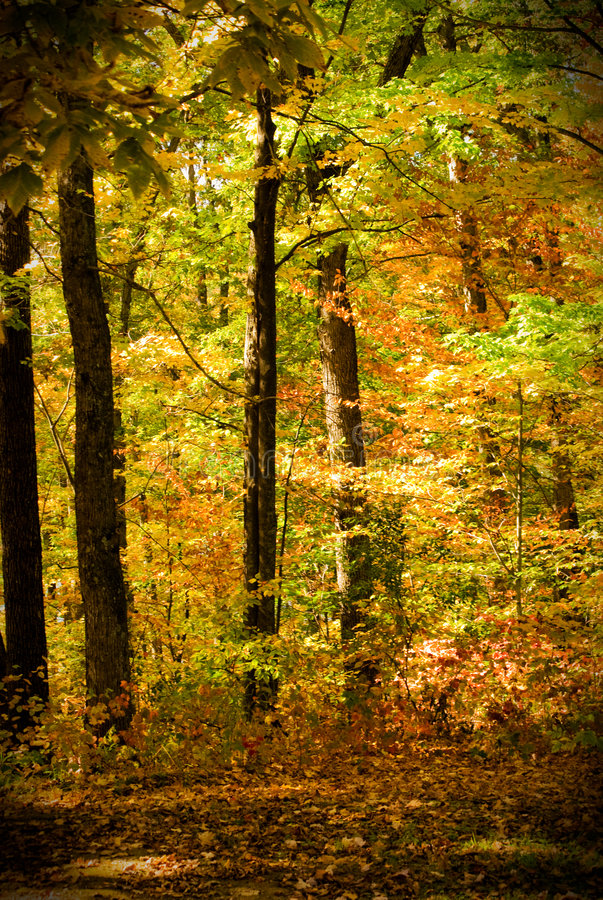Forest in autumn scene royalty free stock photo