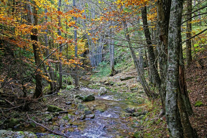 The forest in autumn time in Calabria Italy stock photography