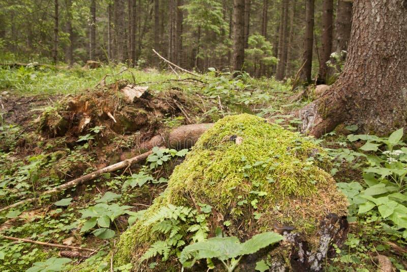 Forest Azuga photos libres de droits