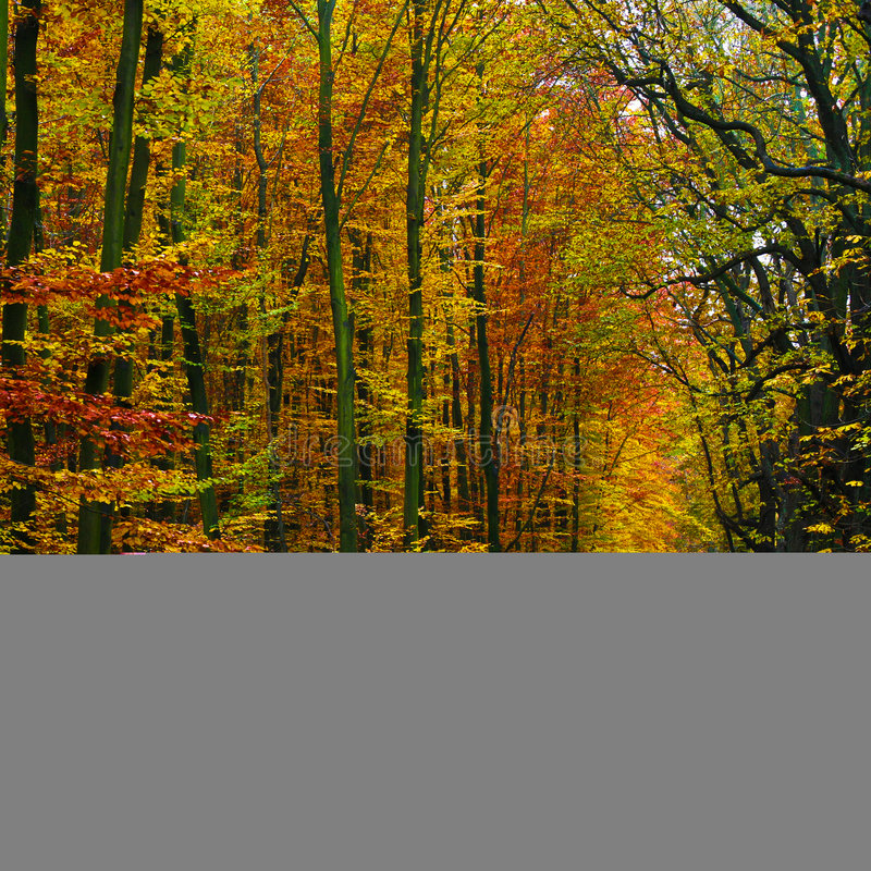 Forest background in autumn 04 stock images