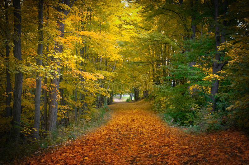 Forest background during fall season royalty free stock image