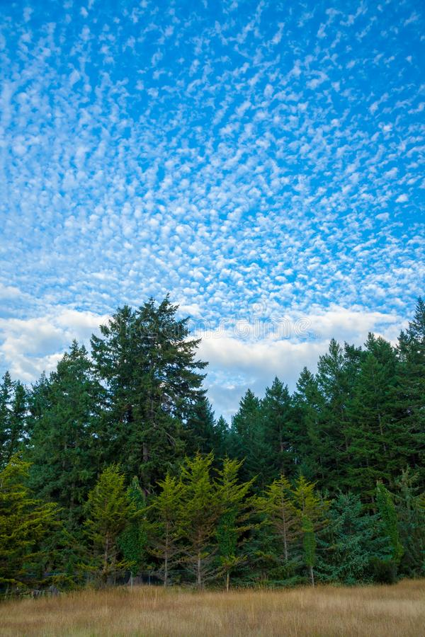 A forest background with an interesting sky stock photos