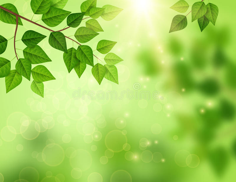 Forest background with sun light through leaves. vector illustration