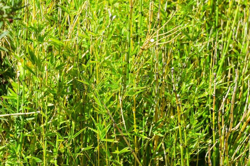 Forest Background Texture en bambou image libre de droits