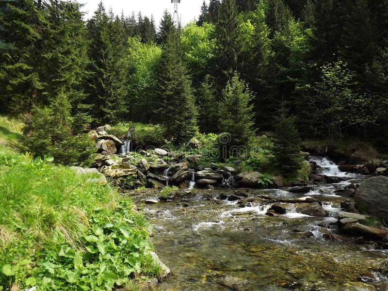 Forest in Balea lac districkt. Forest near Balea Lac district Romania Carpathians pedestrian touristics route royalty free stock image