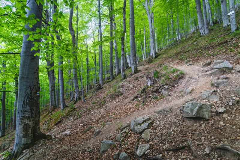 Forest on Balkan Mountain, Bulgaria royalty free stock photography