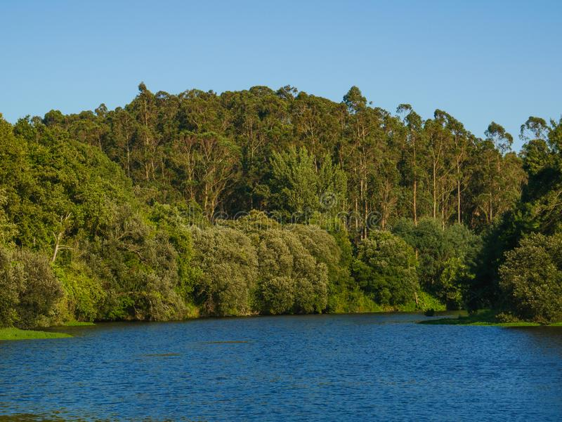 Forest on banks of Ave river in Portugal on a sunny summer day with blue sky royalty free stock photos
