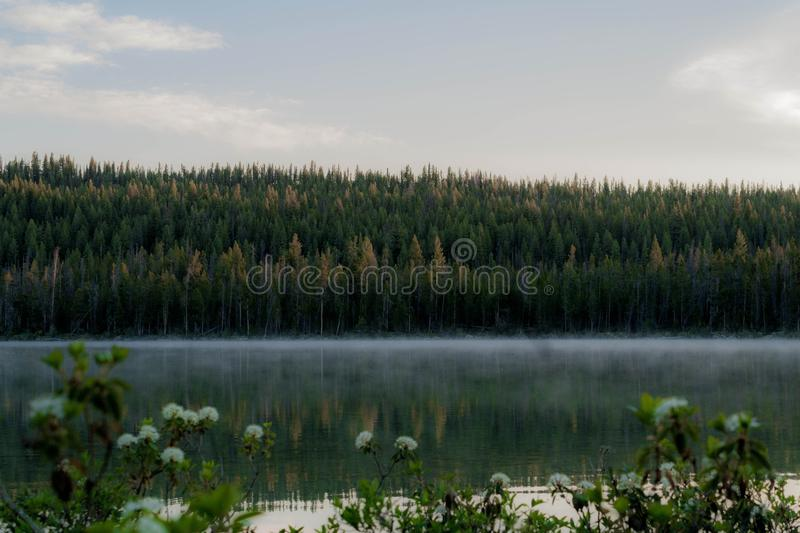 Forest on banks of misty lake stock images