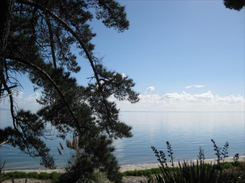 Forest Beach an Clarks-Strand Neuseeland lizenzfreies stockbild
