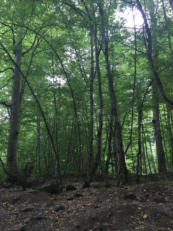 Forest stock photos