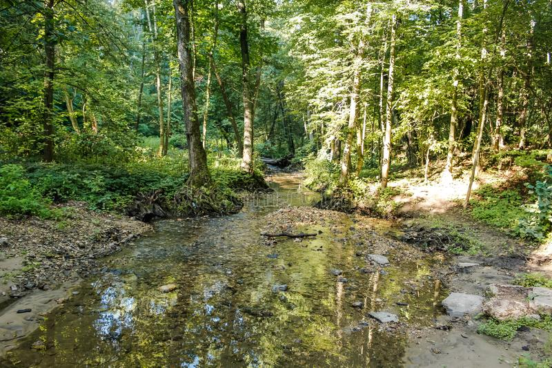 Forest beautiful stream Repinka, Russia royalty free stock image