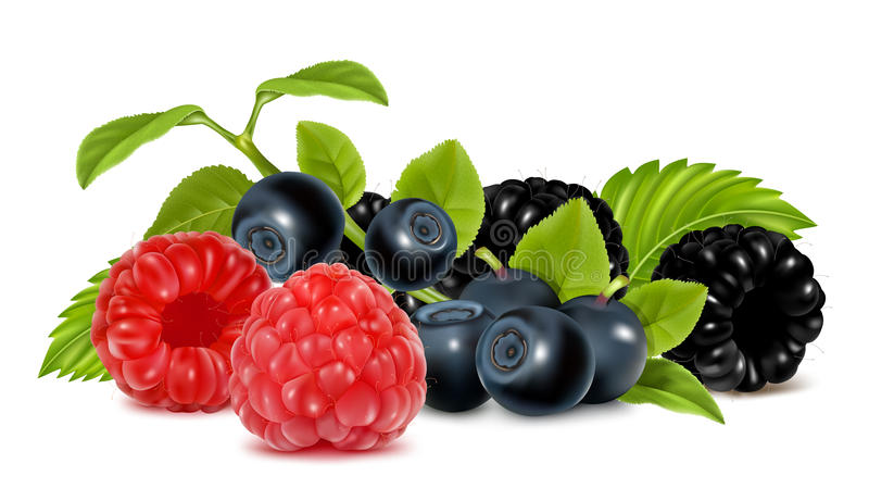 Download Forest Berries. Stock Image - Image: 20411441