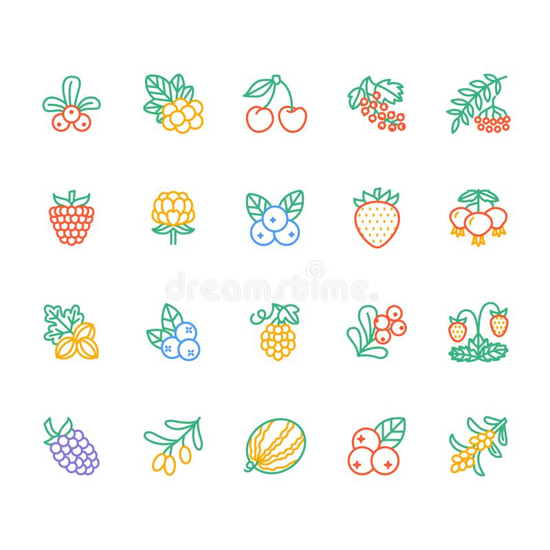 Forest berries colored flat line icons - blueberry, cranberry, raspberry, strawberry, cherry, rowan berry blackberry vector illustration
