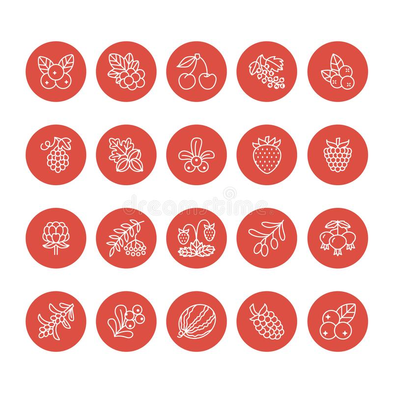 Forest berries flat line icons - blueberry, cranberry, raspberry, strawberry, cherry, rowan berry blackberry. Watermelon vector illustration