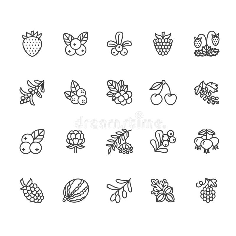 Forest berries flat line icons - blueberry, cranberry, raspberry, strawberry, cherry, rowan berry, blackberry. Watermelon, grapes, olives illustrations for stock illustration