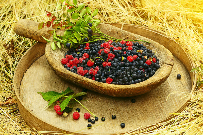 Forest berries royalty free stock images