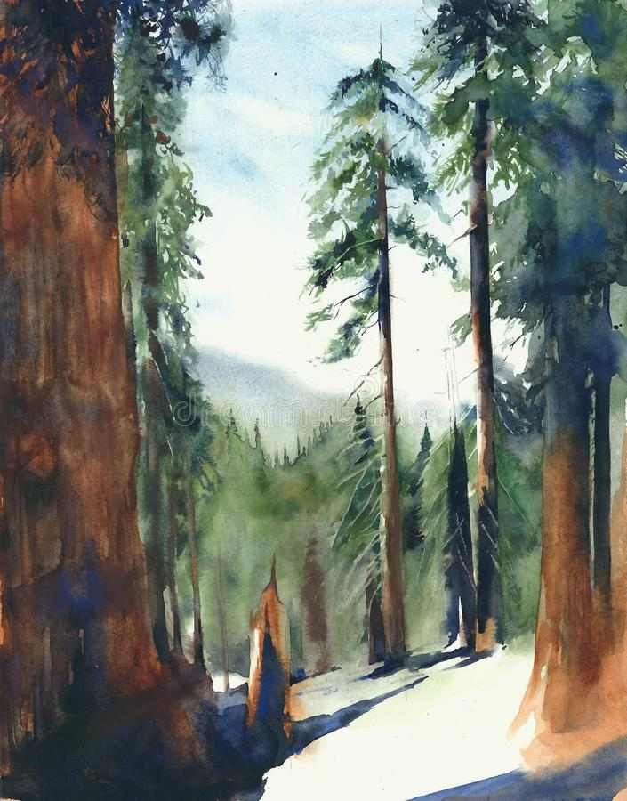 Forest big trees Sequoia national park landscape Sierra Nevada mountains watercolor painting illustration. Forest big trees Sequoia national park landscape vector illustration