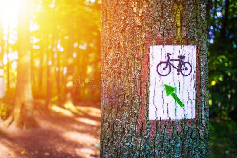 Forest Bike Trail arkivfoton