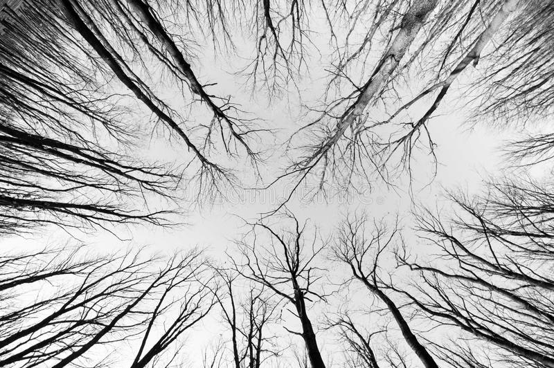 Forest black and white. Fish eye view royalty free stock photos