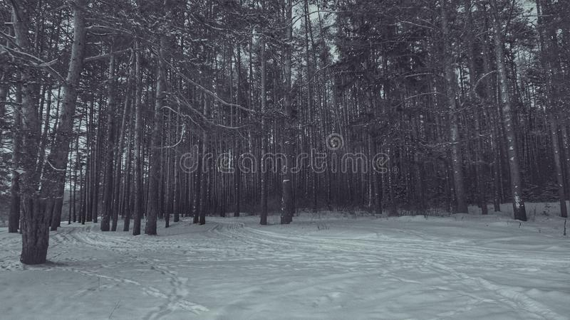 Forest in black and white in minimalist style royalty free stock image