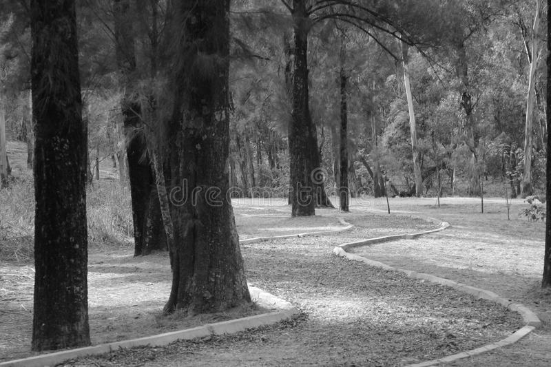 Forest in black and withe stock image