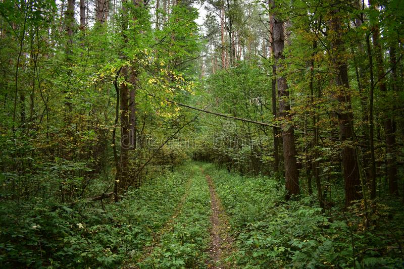 Forest blockage on the road path after a thunderstorm and strong wind, storm stock photo