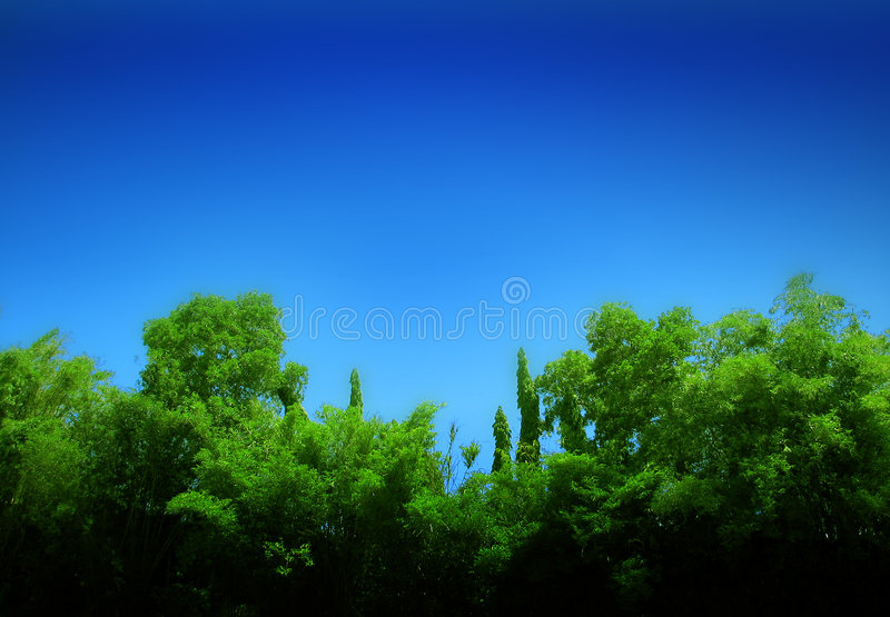 Forest and blue sky stock photo