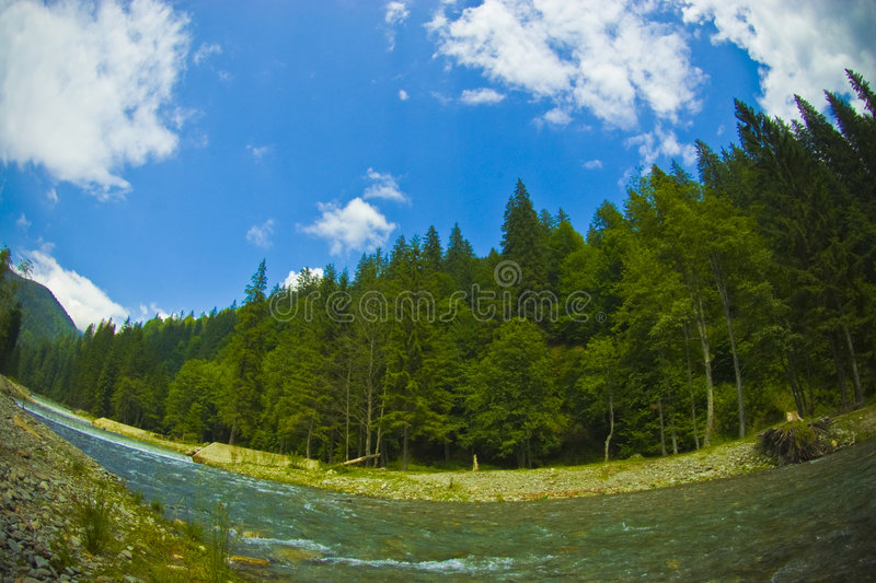 Forest and blue sky stock photography