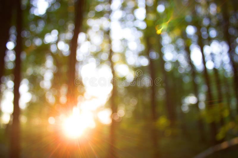 Forest blur baground. Image of summer forest and sun royalty free stock images