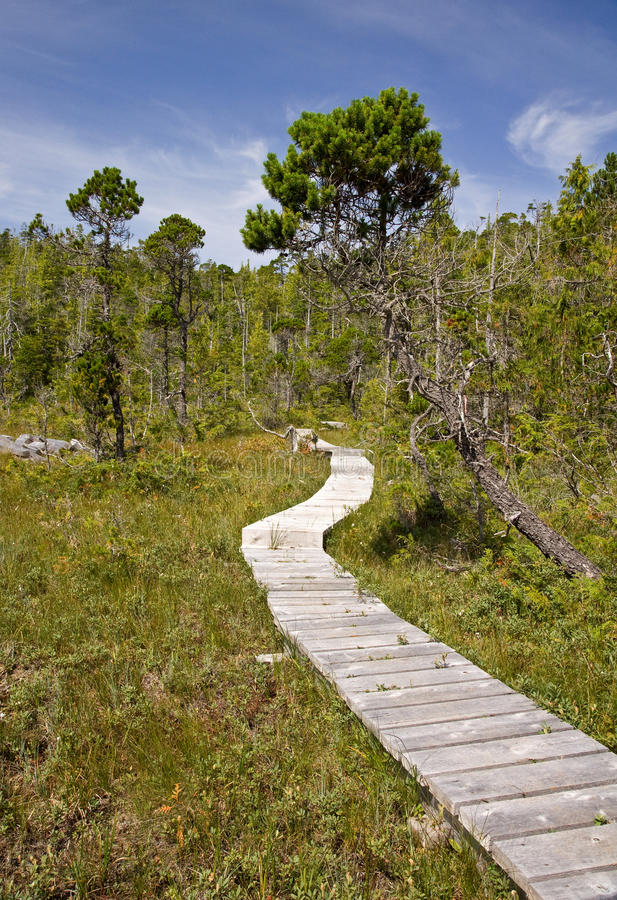 Download Forest boardwalk stock photo. Image of hiking, outside - 11701348