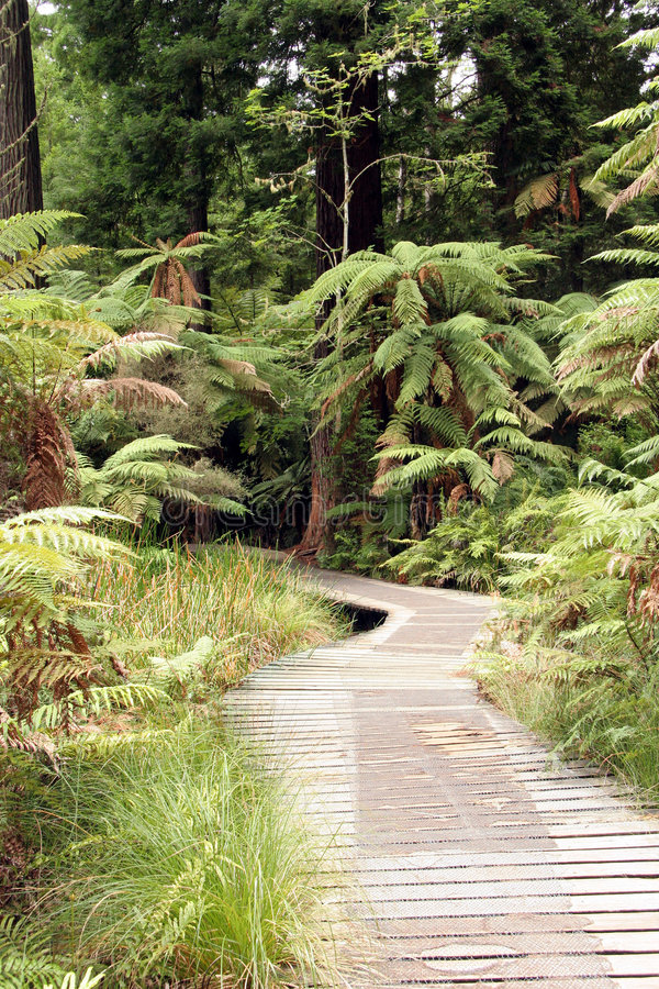 Free Forest Boardwalk Royalty Free Stock Image - 716896