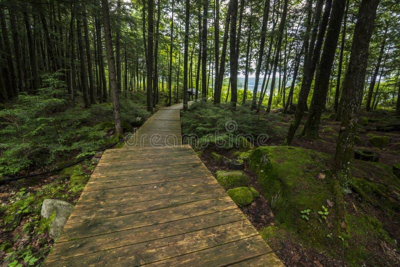 Forest Boardwalk stockbilder