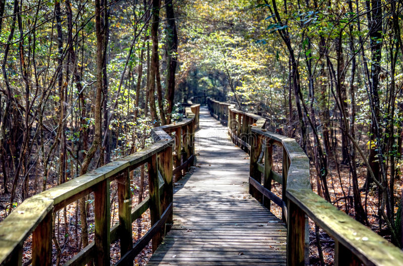 Forest Boardwalk encantado imagem de stock