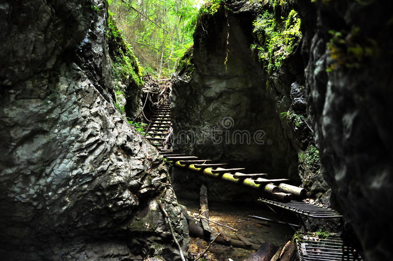 Download Forest Boardwalk In Slovakia Paradise Stock Image - Image of chain, green: 33421235