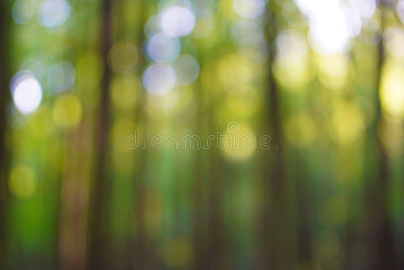 Forest bokeh stock photos