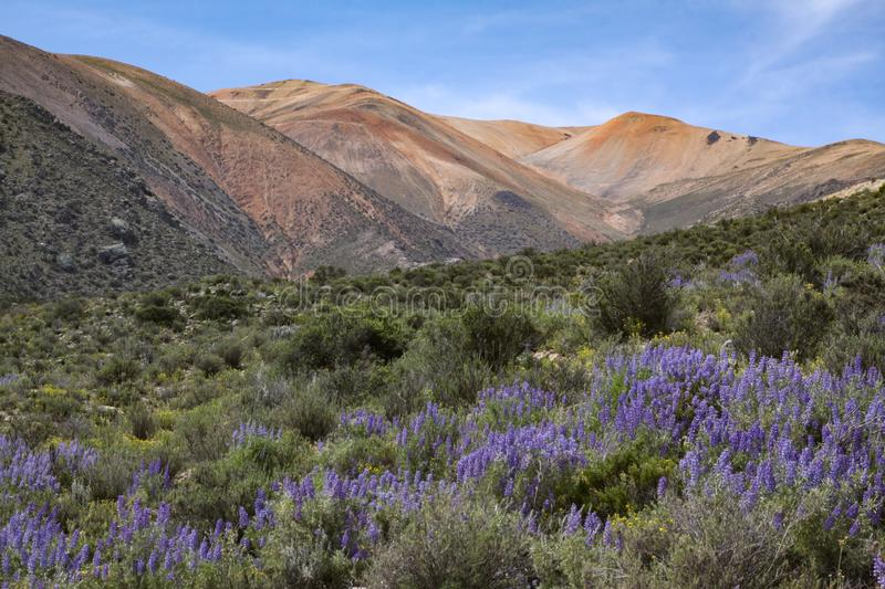 Forest border Andes stock photography
