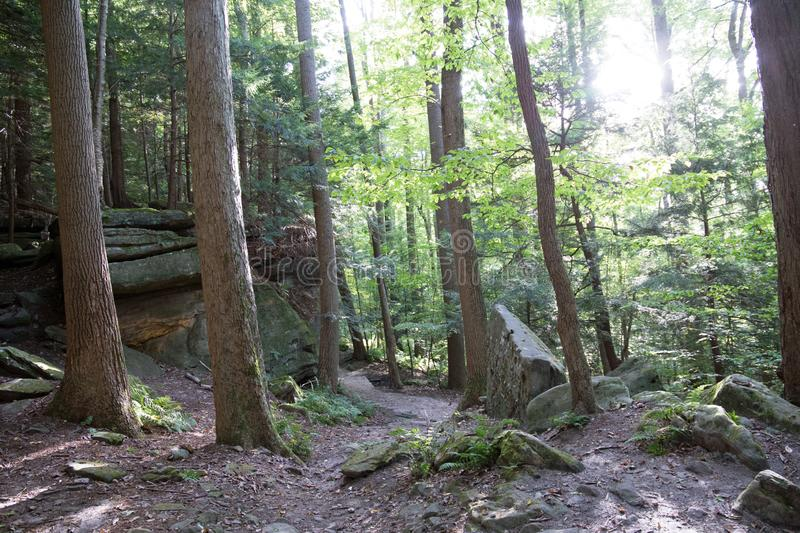 Forest bottom with trails and boulders royalty free stock photography