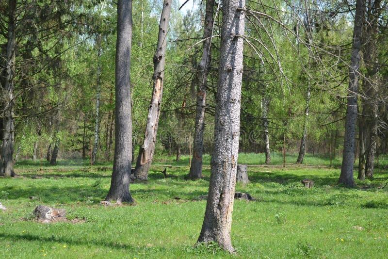 Forest boundary fence netting minsk stock photos