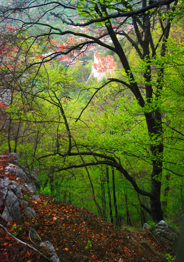 Forest and Bran Castle stock photo