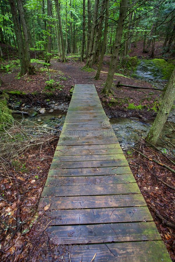 Wooden bridge over forest stream stock photo