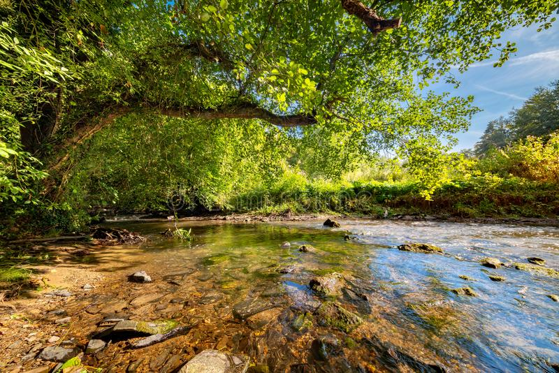 Forest with brook stock image. Image of brook, background ...