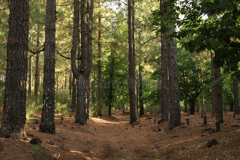 Forest. stock image