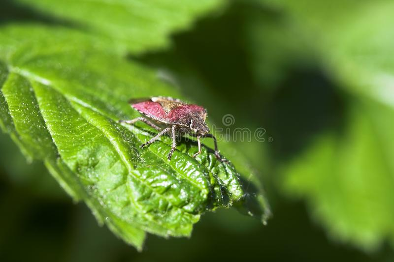 Forest bug. royalty free stock photo