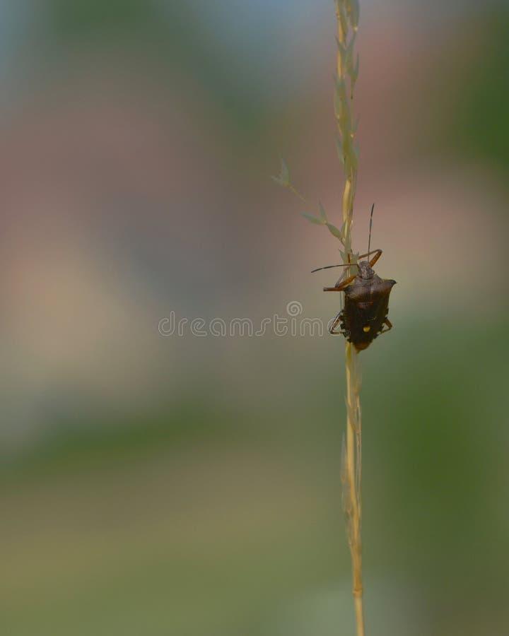 Forest Bug imagem de stock