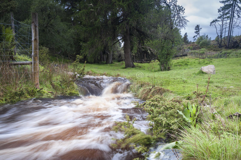 Forest Burn. A small Scottish burn in flood after recent rains royalty free stock images