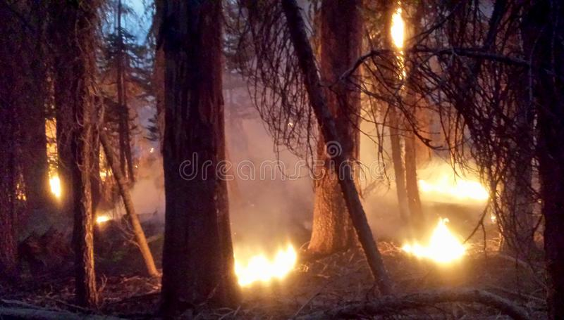 A forest burns royalty free stock photos