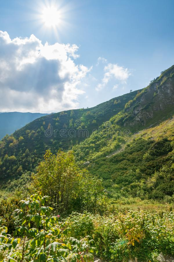 Forest bushes and mountains in the Polish Tatra Mountains royalty free stock photo