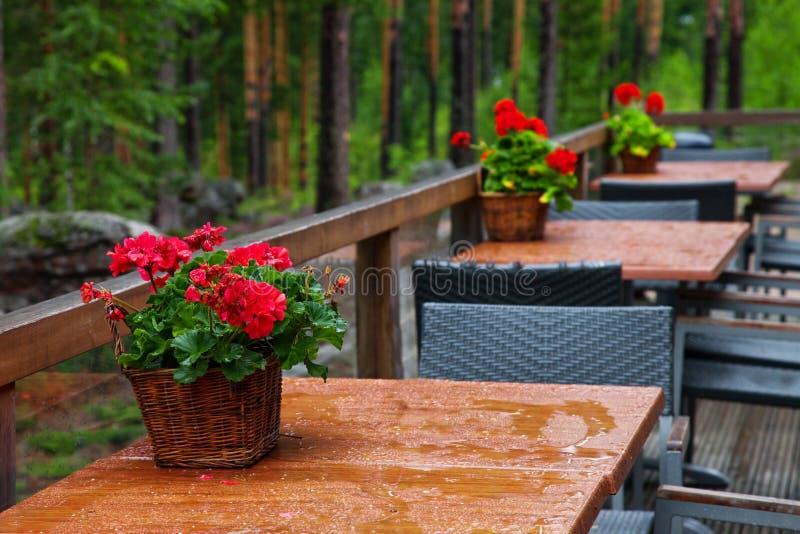 Download Forest cafe-3 stock photo. Image of plant, idyllic, decoration - 25982814