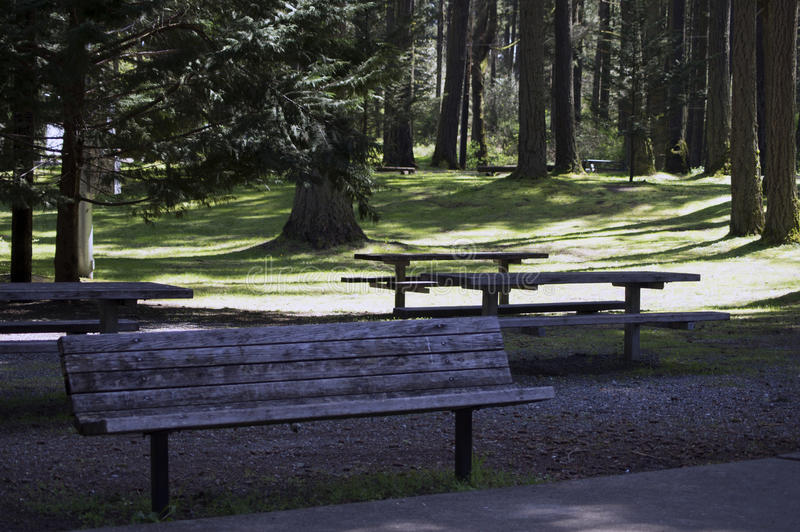 Forest Campgrounds imagens de stock